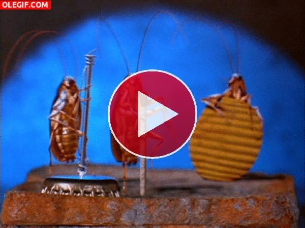GIF: Unas cucarachas muy marchosas