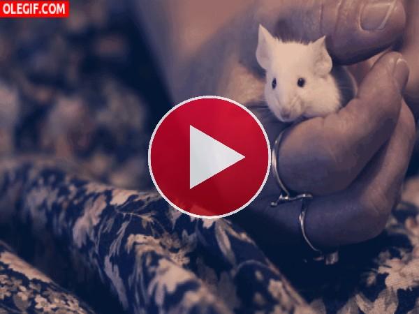 GIF: Un ratoncillo muy cómodo