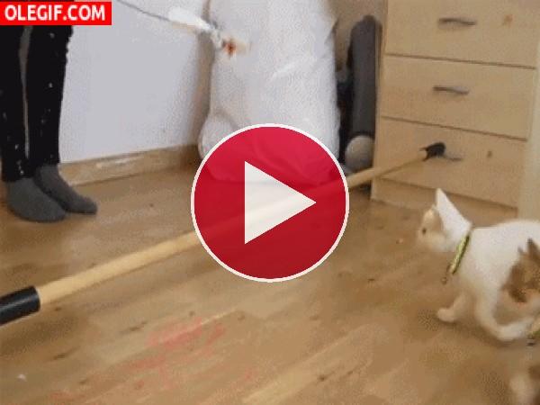 GIF: ¡Qué gatos tan listos!