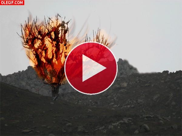 Zarza en llamas