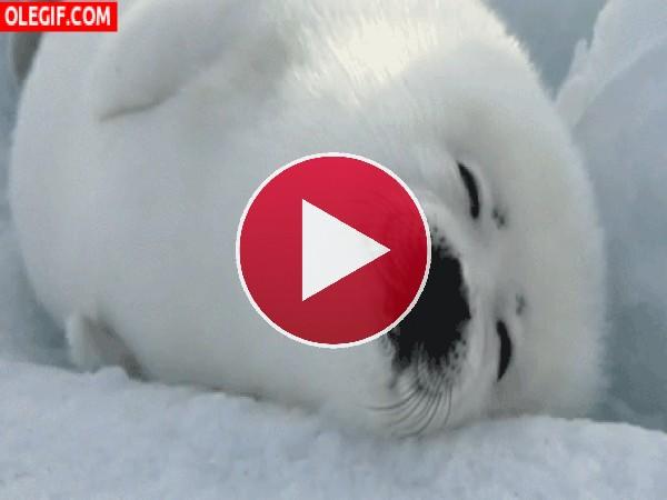 GIF: Esta foca bebé tiene una pesadilla