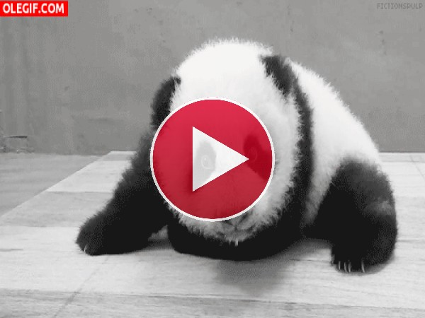 Mira al bebé panda