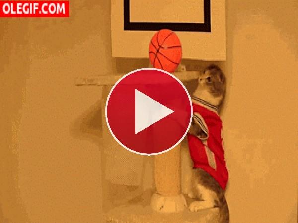 A este gato le gusta jugar al baloncesto