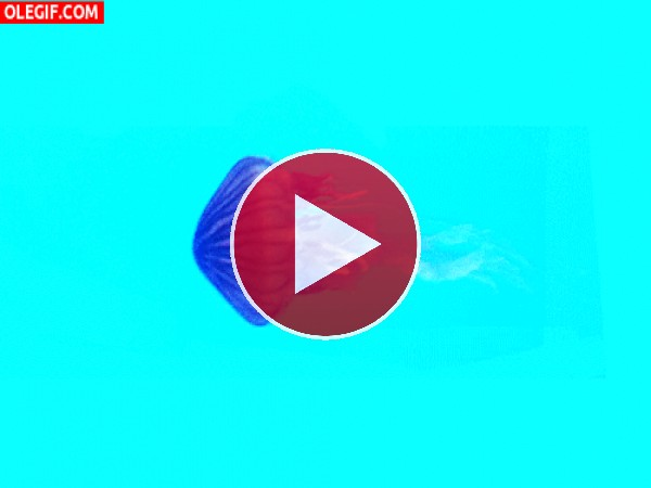 Movimientos de la medusa