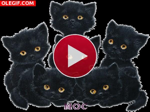 GIF: A estos gatitos se les iluminan los ojos