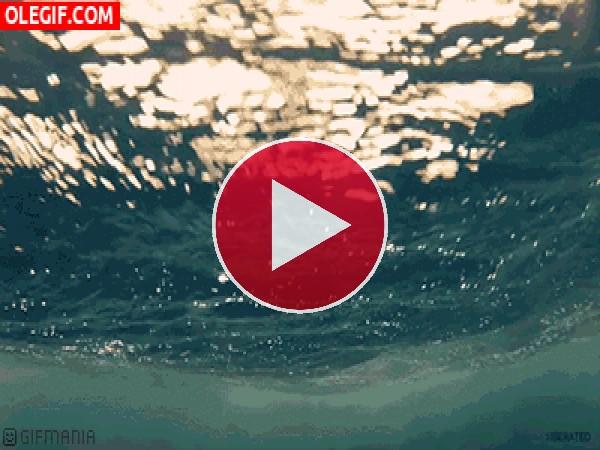 GIF: Bajo el agua