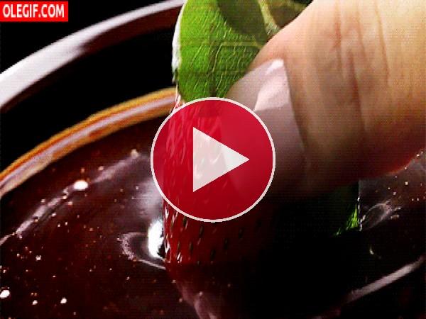 Mojando una fresa en chocolate