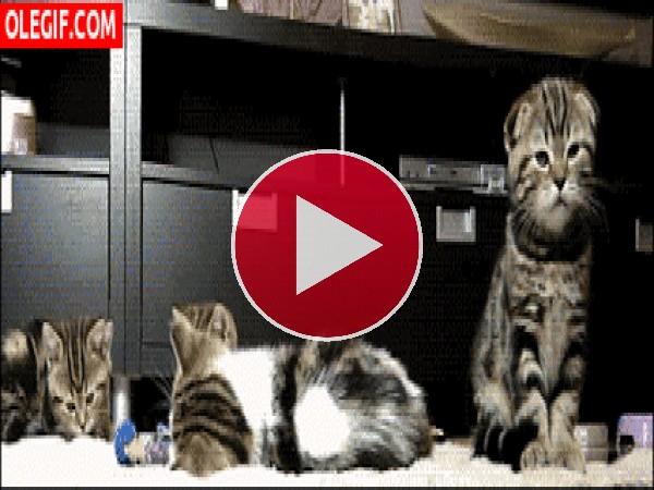 GIF: Estos gatos se han dado un buen susto