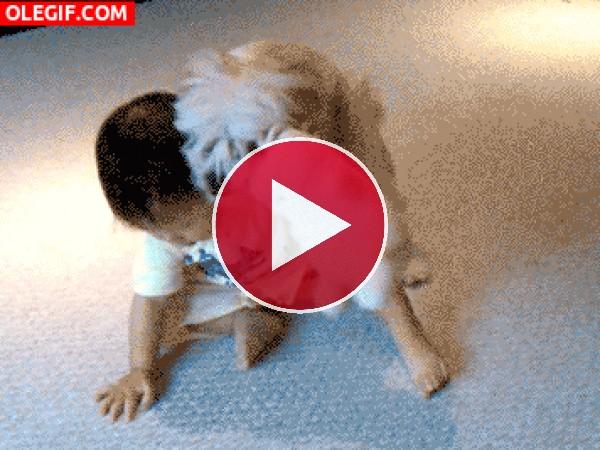 Este perro quiere mucho al bebé