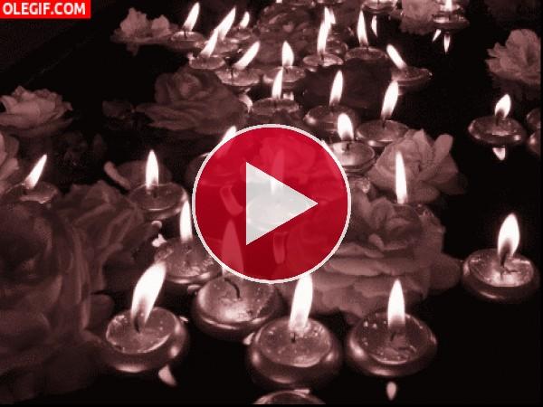 GIF: Velas encendidas florando en el agua