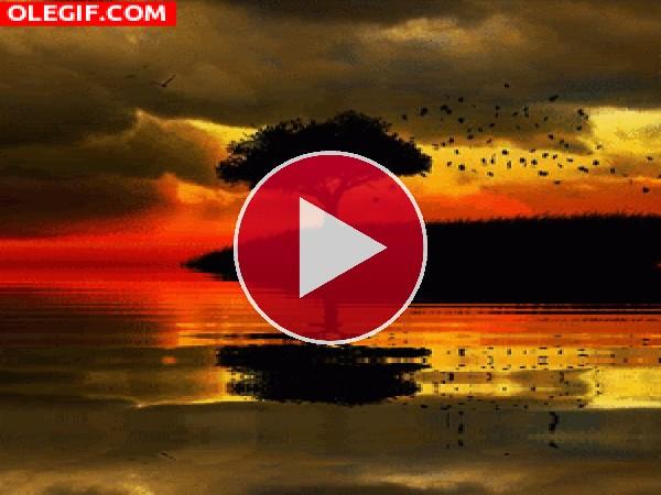 GIF: Árbol reflejado en el agua