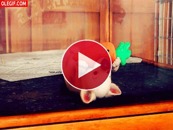 GIF: A este perrito le gustan las zanahorias