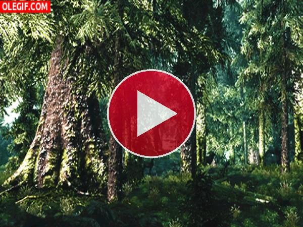 Polen en el bosque