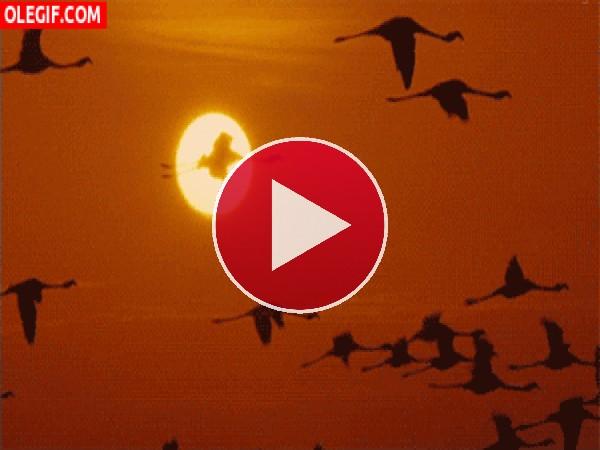 Flamencos volando junto al sol