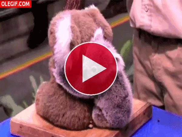 GIF: Mira a este lindo koala