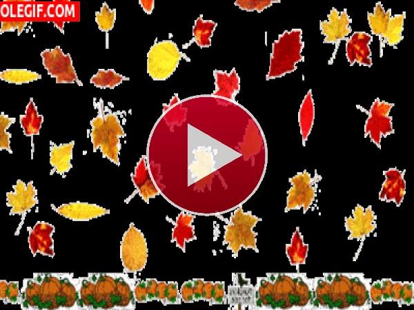 GIF: Llegó el otoño
