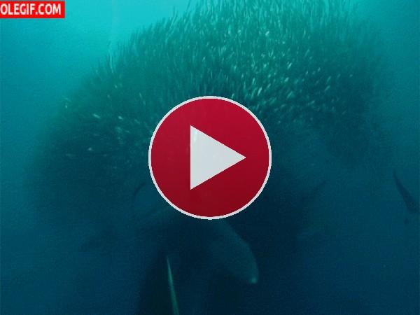 Esta ballena tiene hambre