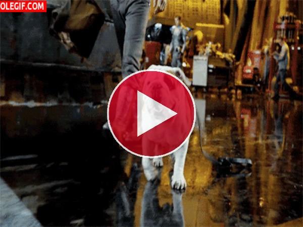 GIF: Este perro se ha escapado
