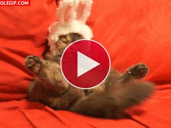GIF: Gato o conejo