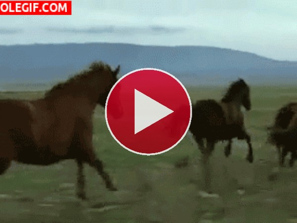 Caballos salvajes corriendo por la llanura