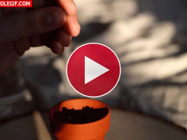 GIF: Plantando semillas