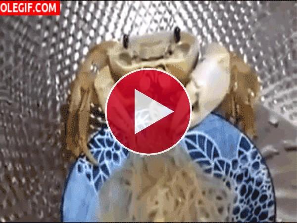 Mira a este cangrejo comiendo espaguetis