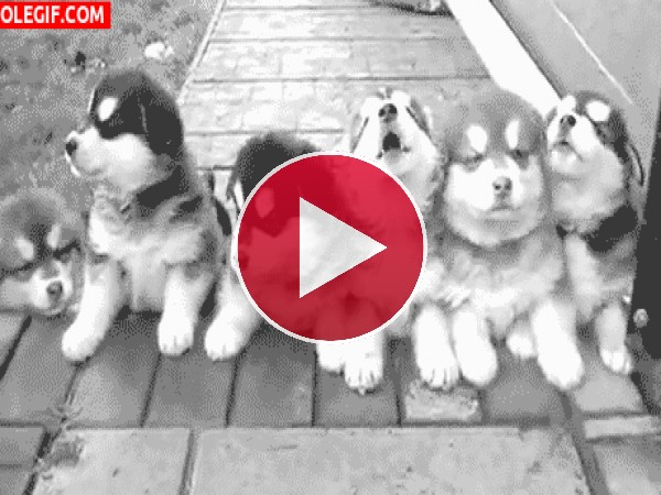 GIF: Estos cachorros están adormilados