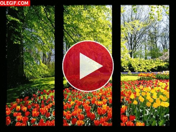 Hojas cayendo sobre los tulipanes
