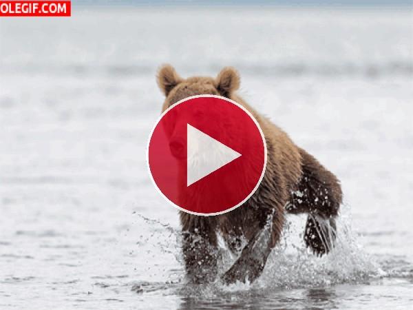 GIF: ¡El agua está muy fría!