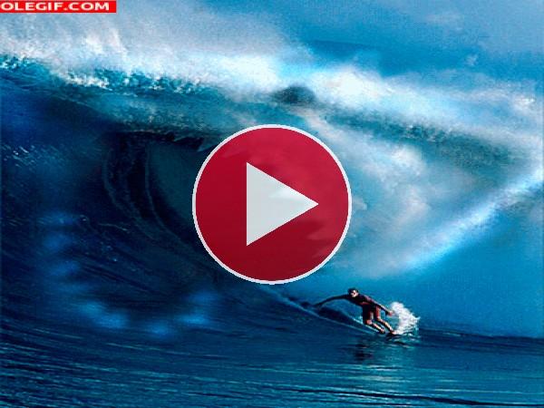 GIF: Tiburón acechando al surfista