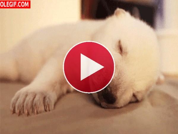 GIF: Este cachorro tiene hambre