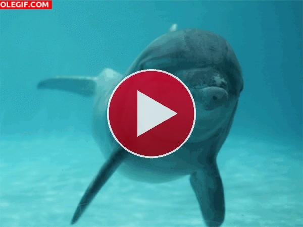 Mira cómo te saluda el delfín