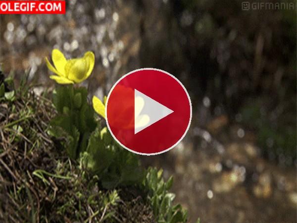 GIF: Flores junto a la cascada