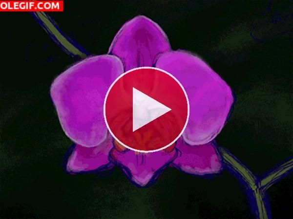 GIF: Pintando una orquídea