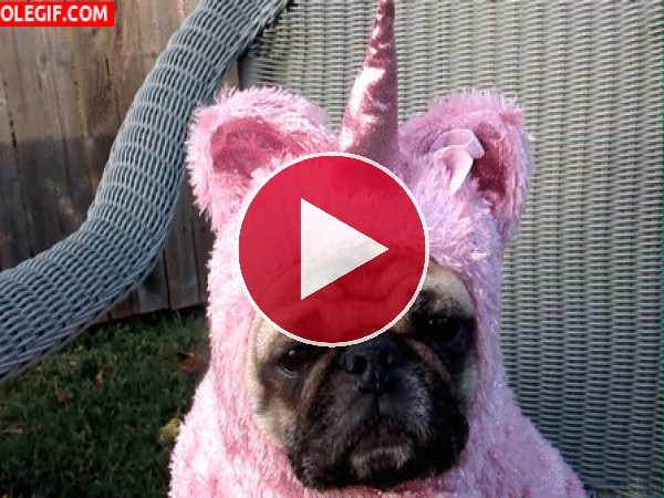 GIF: Soy un unicornio