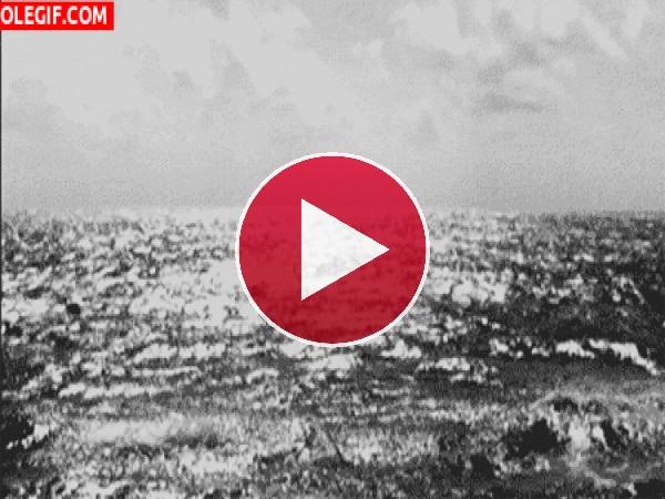 Mira a estos delfines saltando en el mar