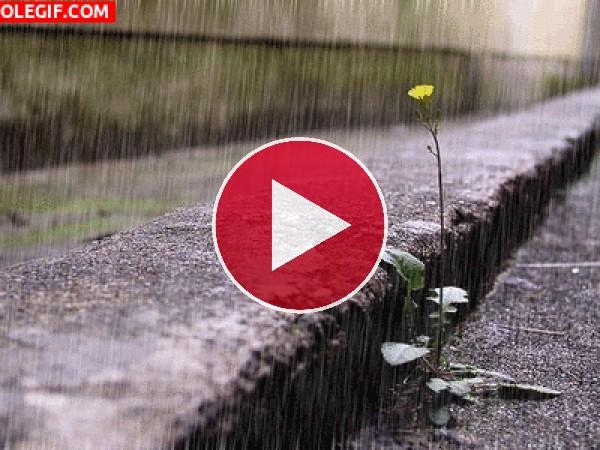 GIF: Lluvia en primavera