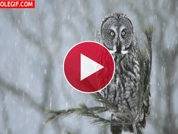 Lechuza quieta bajo la nieve