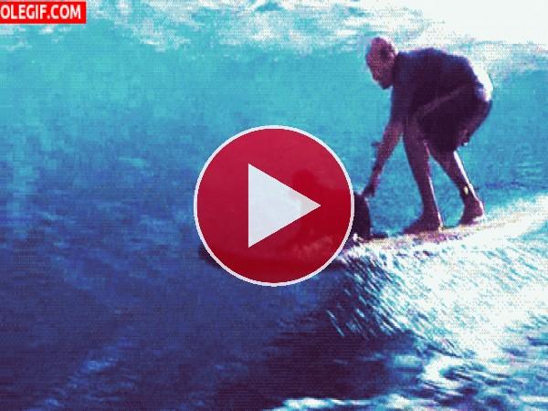 GIF: Surfeando con mi perro