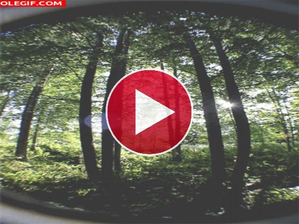 GIF: Sol brillando en el bosque