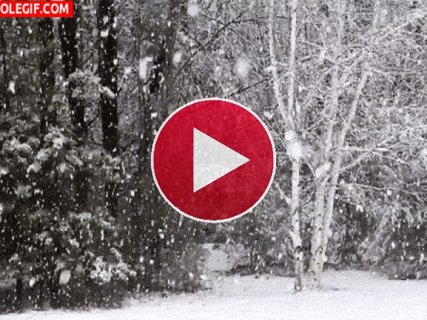 Mira cómo nieva en el bosque