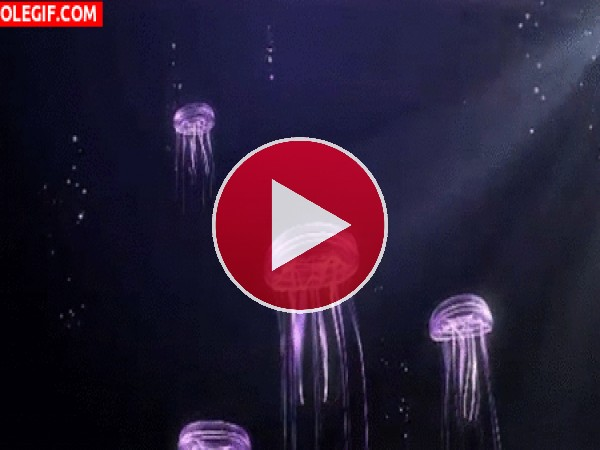 Medusas en movimiento