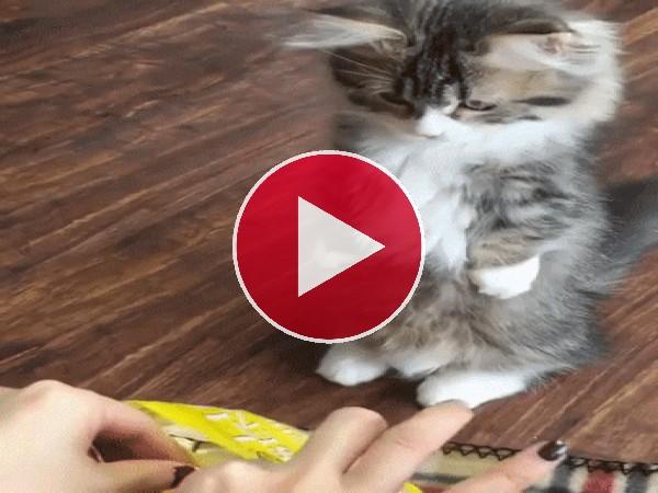 GIF: Mira cómo come el gatito