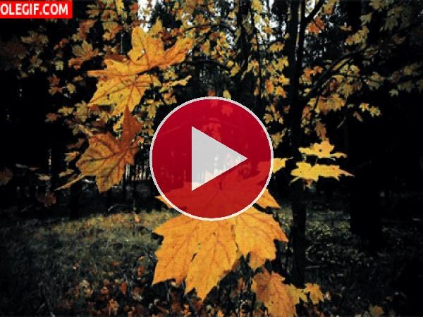 GIF: Hojas en otoño