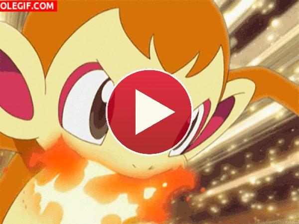GIF: Chimchar envuelto en fuego