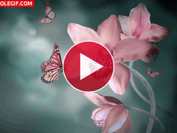 Mariposas volando junto a las orquídeas