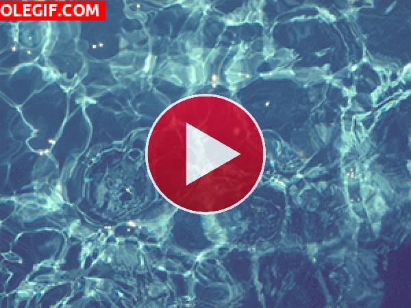 GIF: Agua cristalina