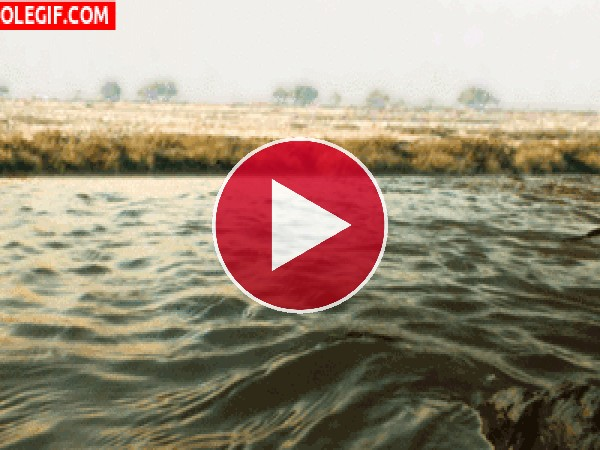 GIF: Movimiento del agua