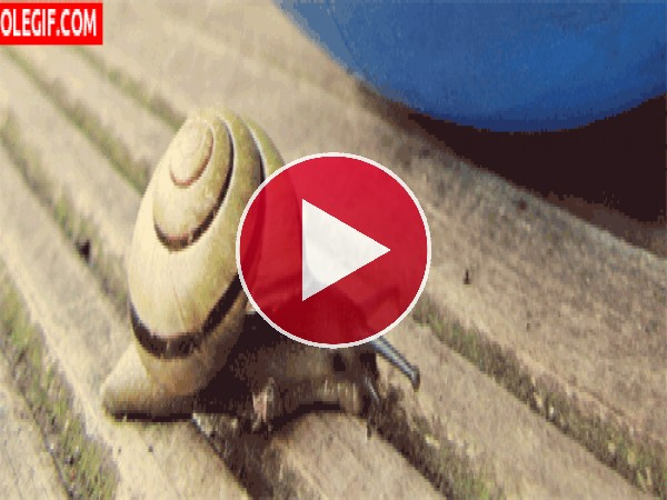 GIF: Mira a este caracol