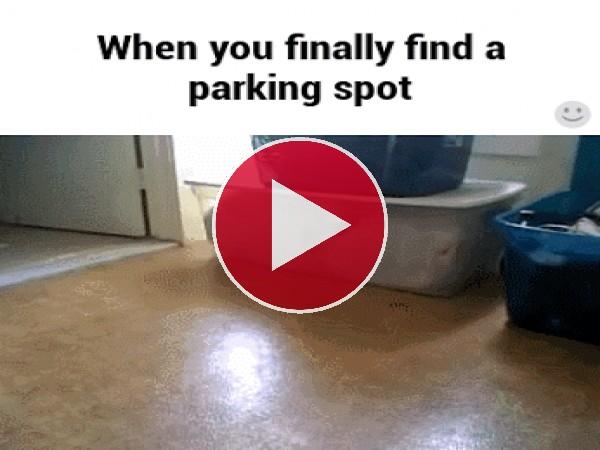 Este gato encontró un hueco para aparcar